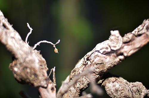 pohon dan kepik