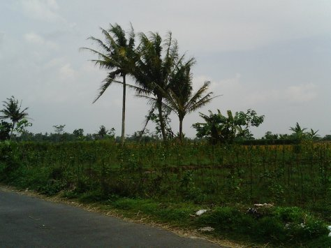 SUNP0006